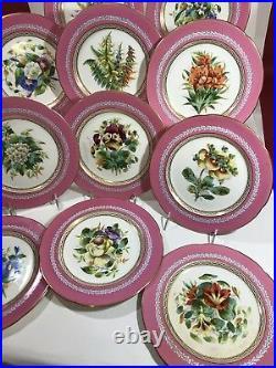 Antique hand painted English Pink-ground blue band botanical plates 11pc 19c